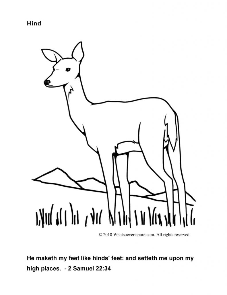 Hind - Free Coloring Page with Bible Verse